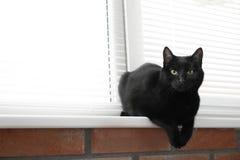 Gatto nero adorabile vicino alla finestra con i ciechi all'interno fotografie stock