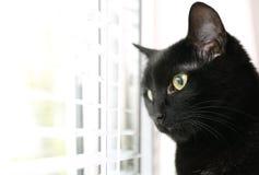 Gatto nero adorabile vicino alla finestra con i ciechi Spazio per testo immagini stock libere da diritti