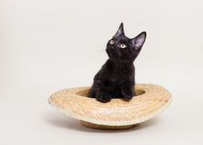 Gatto nero in cappello Immagine Stock