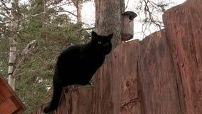 Gatto nero che cammina di sopra recinto di legno stock footage