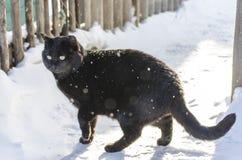 Gatto nero che cammina solo Immagini Stock Libere da Diritti