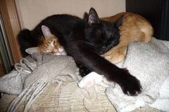 Gatto nero che dorme più di quello rosso Fotografie Stock Libere da Diritti