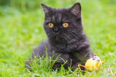 Gatto nero che gioca sull'erba immagini stock