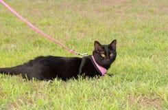 Gatto nero che indossa un cablaggio Fotografia Stock Libera da Diritti
