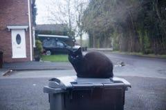 Gatto nero che si siede e che guarda attraverso la finestra Occhi di gatto che guardano attraverso la finestra Concetto superstiz fotografia stock libera da diritti