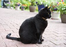 Gatto nero che si siede fuori laterale Fotografia Stock