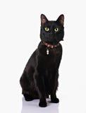 Gatto nero che si siede nella priorità bassa bianca Fotografie Stock