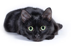 Gatto nero che si trova su un fondo bianco, esaminante macchina fotografica Fotografie Stock Libere da Diritti