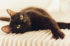 Gatto nero che si trova sulla copertura grigia della pelliccia sul letto fotografie stock