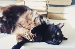 Gatto nero che si trova sulla tavola bianca, pila di vecchi libri su fondo fotografia stock libera da diritti