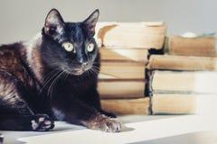 Gatto nero che si trova sulla tavola bianca, pila di vecchi libri su fondo immagini stock