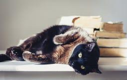Gatto nero che si trova sulla tavola bianca, pila di vecchi libri su fondo fotografia stock