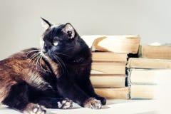 Gatto nero che si trova sulla tavola bianca, pila di vecchi libri su fondo immagine stock