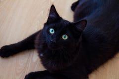 Gatto nero che si trova sulla terra Fotografia Stock Libera da Diritti