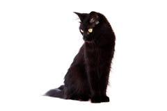 Gatto nero con capelli lunghi che osservano giù Fotografie Stock Libere da Diritti