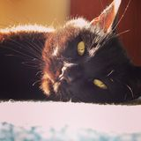 Gatto nero con gli occhi arancio Fotografia Stock Libera da Diritti