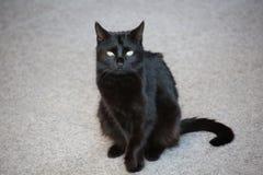 Gatto nero con gli occhi espressivi fotografie stock