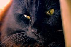Gatto nero con gli occhi gialli Fotografie Stock Libere da Diritti