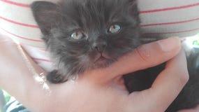 Gatto nero con i bei occhi a disposizione fotografie stock