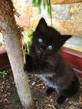 Gatto nero con il gioco profondo degli occhi azzurri Fotografia Stock
