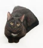 Gatto nero con il punto bianco dell'occhio di giallo e Fotografia Stock