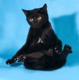 Gatto nero con le gocce di occhi gialle sul blu Fotografia Stock