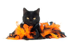Gatto nero con le piume nere ed arancioni Fotografia Stock