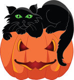 Gatto nero con una zucca di Halloween Fotografie Stock Libere da Diritti