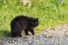 Gatto nero dai capelli lunghi fotografia stock libera da diritti