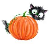 Gatto nero di Halloween dietro la zucca Fotografie Stock Libere da Diritti