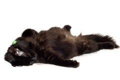 Gatto nero di riposo Fotografia Stock