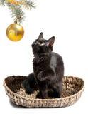 Gatto nero e giocattoli di natale Fotografia Stock