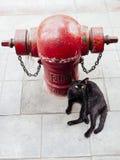 Gatto nero e pompa idraulica del firman Immagine Stock