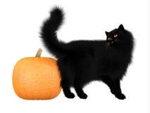 Gatto nero e zucca di Halloween Fotografie Stock Libere da Diritti