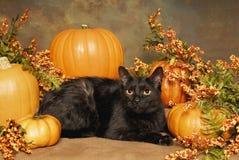 Gatto nero e zucche Immagini Stock Libere da Diritti