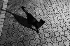 Gatto nero fuori con l'ombra di notte Fotografia Stock Libera da Diritti