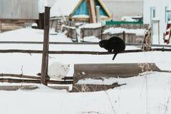 Gatto nero, gatto bianco su un inverno di recintare Fotografia Stock Libera da Diritti