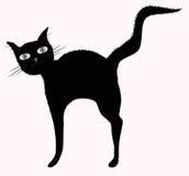 Gatto nero gran-eyed divertente con la coda lanuginosa alzata Fotografia Stock