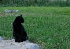 Gatto nero grazioso immagine stock libera da diritti
