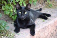 Gatto nero impressionante della via fotografie stock libere da diritti