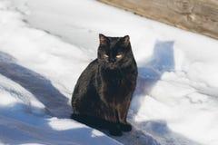 Gatto nero nella neve che prende il sole al sole Immagini Stock Libere da Diritti