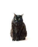 Gatto nero nella parte anteriore fotografie stock libere da diritti