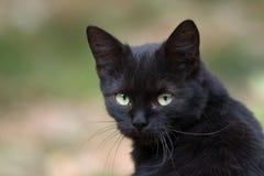 Gatto nero piacevole Fotografie Stock Libere da Diritti