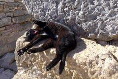Gatto nero pigro Fotografia Stock