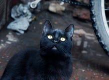 Gatto nero profondo nel Marocco immagini stock