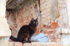 Gatto nero senza tetto che si siede sulle rovine di una casa abbandonata immagini stock libere da diritti