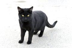 Gatto nero solo Fotografia Stock