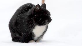Gatto nero su neve bianca archivi video