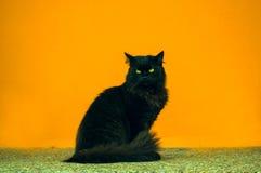 Gatto nero sui precedenti arancio Fotografie Stock Libere da Diritti