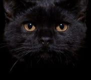 Gatto nero sul nero Immagini Stock Libere da Diritti